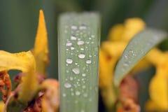 Schizzi di estate della flora e della fauna fotografia stock libera da diritti