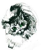 Schizzi il gattino, il disegno del gattino, disegno dell'inchiostro Fotografia Stock Libera da Diritti