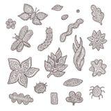 Schizzi la raccolta del grafico di vettore degli elementi floreali ed animali stilizzati Insetti, fiori e foglie modellati sulla  Fotografie Stock