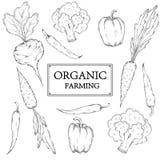 Schizzi la raccolta delle verdure disegnate a mano, illustrazione di vettore Fotografia Stock Libera da Diritti
