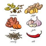 Schizzi le spezie di stile - l'aglio, lo zenzero, la curcuma, il cardamomo, il peperoncino rosso, cumino Fotografia Stock