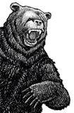 Schizzo arrabbiato dell'orso Immagini Stock