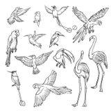Schizzo in bianco e nero di vettore fissato disegnato a mano Raccolta degli uccelli tropicali esotici Disegno di profilo isolato  Fotografia Stock