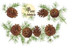 Schizzo botanico realistico dell'inchiostro dei rami di albero variopinti dell'abete con la pigna isolata su fondo bianco Buona i illustrazione di stock