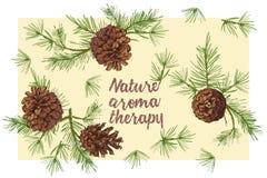 Schizzo botanico realistico dell'inchiostro dei rami di albero variopinti dell'abete con la pigna isolata su fondo bianco Buona i illustrazione vettoriale