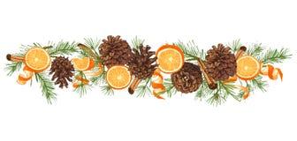 Schizzo botanico realistico dell'inchiostro della ghirlanda variopinta dell'albero di abete con la pigna isolata su fondo bianco  royalty illustrazione gratis