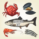 Schizzo creativo del grafico dei frutti di mare Illustrazione di vettore royalty illustrazione gratis