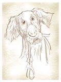 Schizzo dei cani Immagini Stock Libere da Diritti