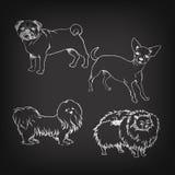 Schizzo dei cani dell'insieme sulla lavagna Immagine Stock Libera da Diritti