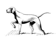 schizzo del cane Fotografie Stock