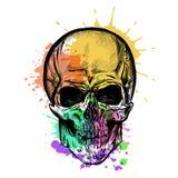 Schizzo del cranio con effetto dell'acquerello Vettore Fotografia Stock Libera da Diritti