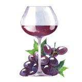 Schizzo dell'acquerello di vettore di vino e dell'uva Fotografia Stock Libera da Diritti