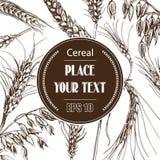 Schizzo dell'illustrazione di vettore - autunno I raccolti disegnati a mano del cereale di vettore Immagini Stock