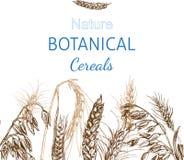 Schizzo dell'illustrazione di vettore - autunno I raccolti disegnati a mano del cereale di vettore Immagine Stock Libera da Diritti
