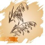 Schizzo dell'illustrazione di vettore - autunno Il cereale disegnato a mano di vettore pota gli schizzi Immagini Stock