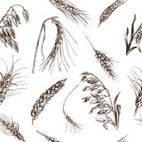 Schizzo dell'illustrazione di vettore - autunno il cereale disegnato a mano pota gli schizzi Fotografia Stock Libera da Diritti