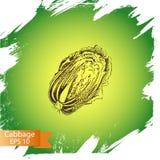 Schizzo dell'illustrazione di vettore - cavolo verdura Fotografie Stock