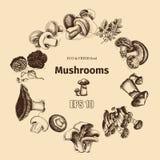 Schizzo dell'illustrazione di vettore - funghi Fotografia Stock