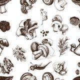 Schizzo dell'illustrazione di vettore - funghi Fotografie Stock Libere da Diritti