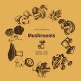 Schizzo dell'illustrazione di vettore - funghi Immagini Stock