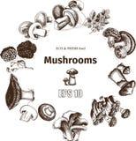 Schizzo dell'illustrazione di vettore - funghi Fotografie Stock