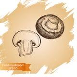 Schizzo dell'illustrazione di vettore - funghi di campo Immagine Stock