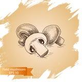 Schizzo dell'illustrazione di vettore - funghi Carta dell'alimento Fotografie Stock Libere da Diritti