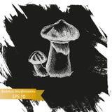 Schizzo dell'illustrazione di vettore - funghi del boletus Fotografie Stock