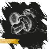 Schizzo dell'illustrazione di vettore - funghi del boletus Immagine Stock