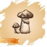 Schizzo dell'illustrazione di vettore - funghi del boletus Immagini Stock Libere da Diritti