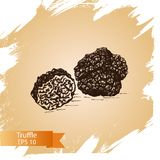 Schizzo dell'illustrazione di vettore - funghi del tartufo Fotografia Stock Libera da Diritti