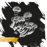 Schizzo dell'illustrazione di vettore - funghi di miele Fotografia Stock Libera da Diritti