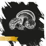Schizzo dell'illustrazione di vettore - funghi Shiitake Immagine Stock