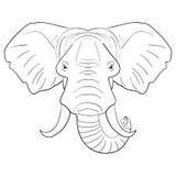 Schizzo dell'inchiostro disegnato fronte in bianco e nero dell'elefante Fotografia Stock