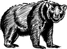 Schizzo dell'orso Immagine Stock Libera da Diritti