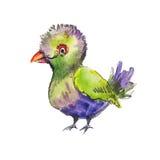 Schizzo dell'uccello verde tropicale Schizzo disegnato a mano divertente Fotografia Stock