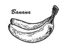 Schizzo della banana inciso Fotografia Stock Libera da Diritti