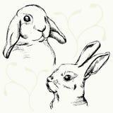 Schizzo della museruola dei conigli Fotografia Stock Libera da Diritti