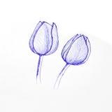 Schizzo della penna del tulipano Immagini Stock