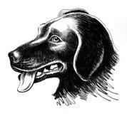 Schizzo della testa di cane Fotografie Stock Libere da Diritti