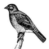 Schizzo dettagliato di un uccello su un ramo Fotografia Stock