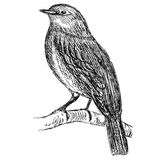 Schizzo dettagliato di un uccello su un ramo Immagini Stock Libere da Diritti
