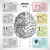 Schizzo di emisferi del cervello infographic Fotografie Stock Libere da Diritti