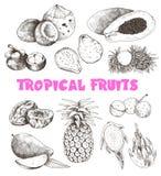 Schizzo di frutti tropicali royalty illustrazione gratis
