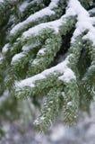 Schizzo di inverno Fotografia Stock