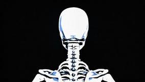 Schizzo di scheletro, a matita su un fondo scuro stock footage