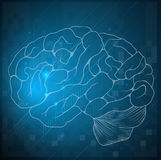 Schizzo di un cervello umano Fotografia Stock