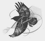 Schizzo di un corvo Fotografie Stock Libere da Diritti