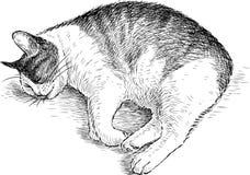 Schizzo di un gatto di sonno illustrazione di stock