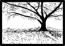 Schizzo di una quercia Immagine Stock